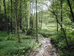 Tag der Artenvielfalt 2004