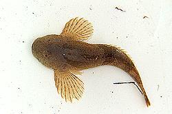 Groppe - Tag der Artenvielfalt 2005