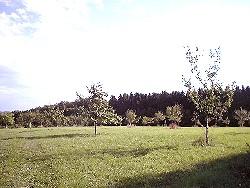 Obstwiese am Tannenbaum