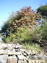 Steinschüttung am Tannenbaum