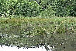 Tag der Artenvielfalt 2005