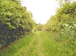 Weg auf dem Tannenbaum