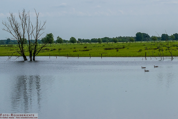 Überschwemmungsfläche auf der Bislicher Insel