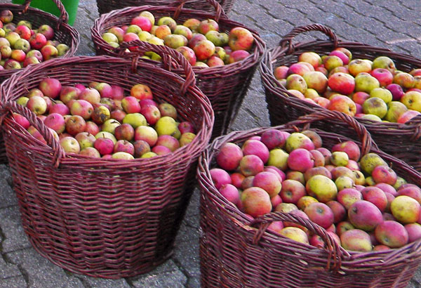 Apfelsaft aus den eigenen Äpfeln