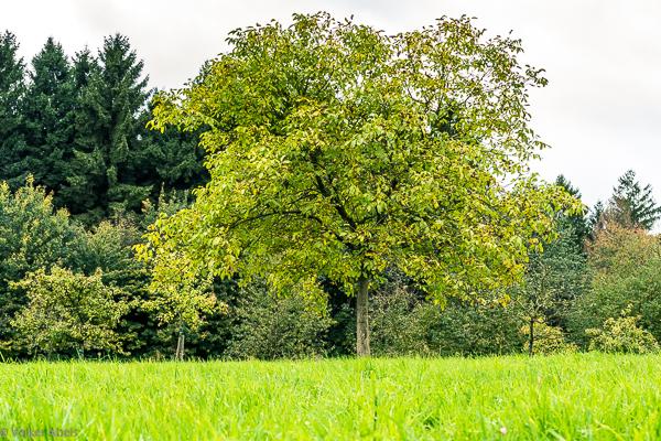 """Grundstück """"Am Tannenbaum"""""""