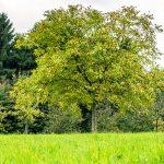 Die Geschichte der Arbeitsgemeinschaft Umweltschutz - AGU