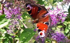 Wettbewerb – Aktion Blüten & Insekten