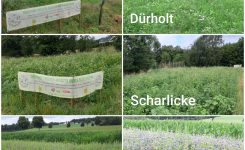 Blühwiesen in Schwelm – ein kurzes Zwischenfazit