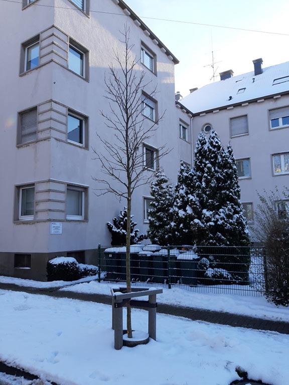 Amberbaum Bismarckstraße