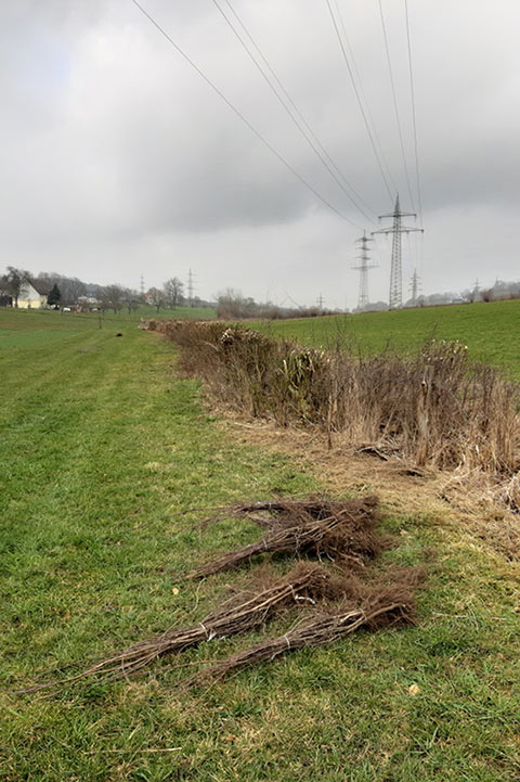 Hecke in Linderhausen